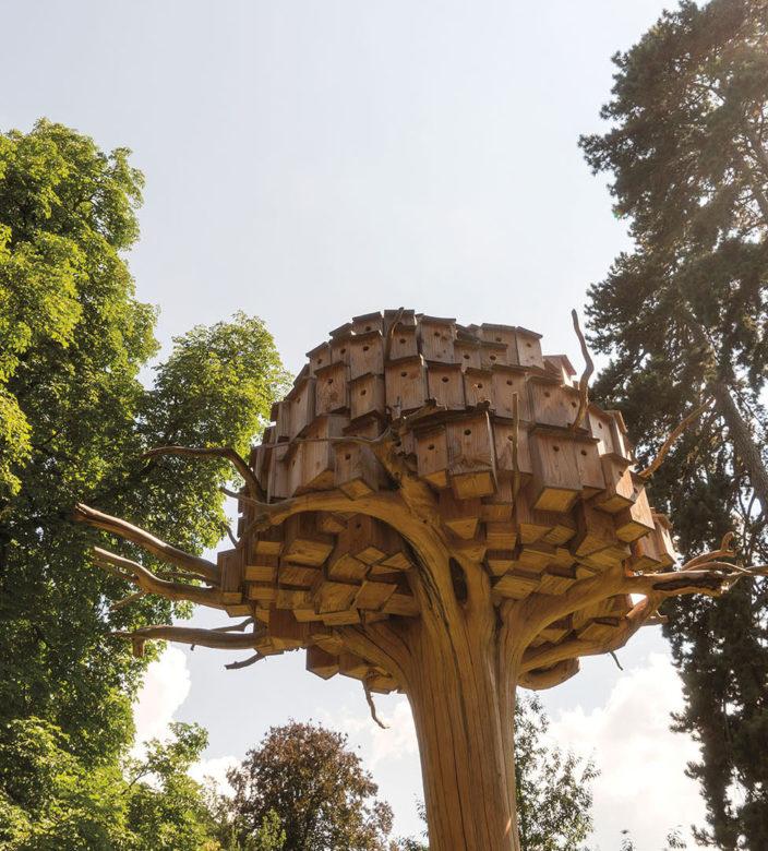 annecy paysages 2019 arbre nichoir bob verschueren
